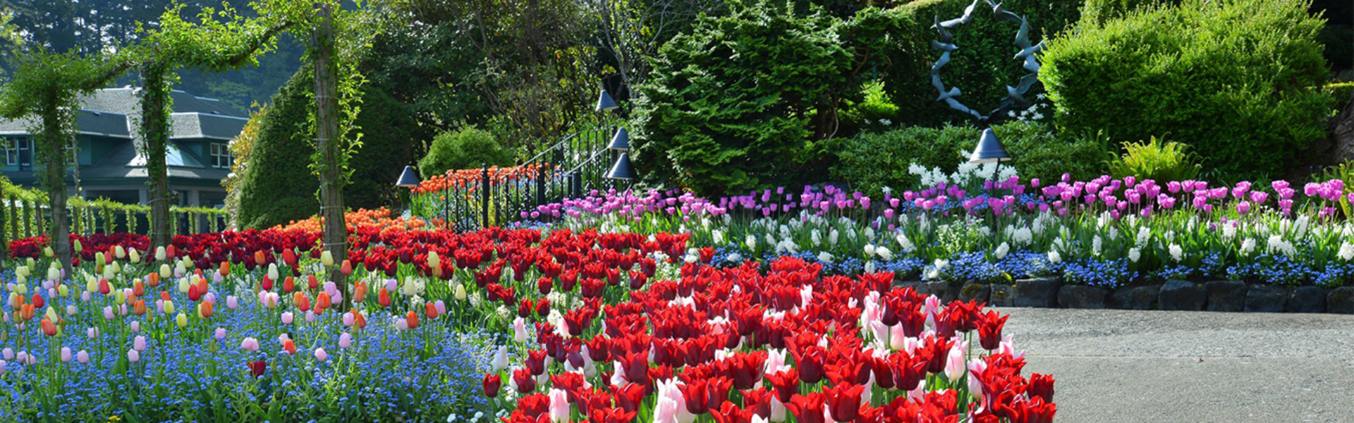 Butchart Gardens tulip bedt and path